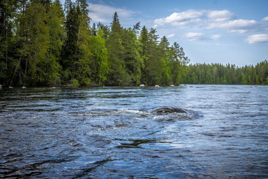 Konneveden Kosket mukana kehittämässä vastuullista matkailua Keski-Suomessa